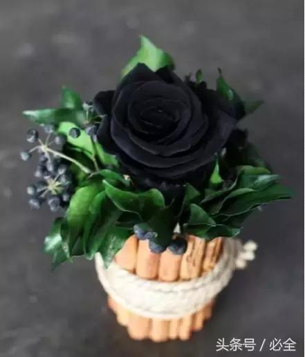 八種黑色花,你見過嗎? - 每日頭條