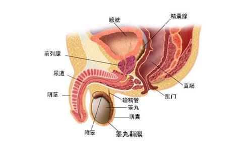 前列腺結石會帶來哪些危害 - 每日頭條