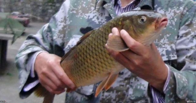 春季來了、你還只釣鯽魚嗎?看看這些春季釣鯉魚的技巧吧! - 每日頭條