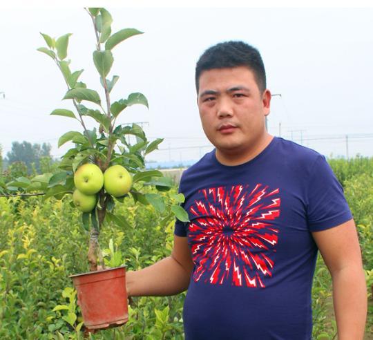 在家種蘋果盆栽結果實操法。一盆蘋果讓你吃到夠夠的。再也不用買。感覺美美的 - 每日頭條