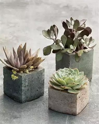 裝修剩下的水泥再利用 DIY個創意花盆盆栽!滿滿的工業風! - 每日頭條