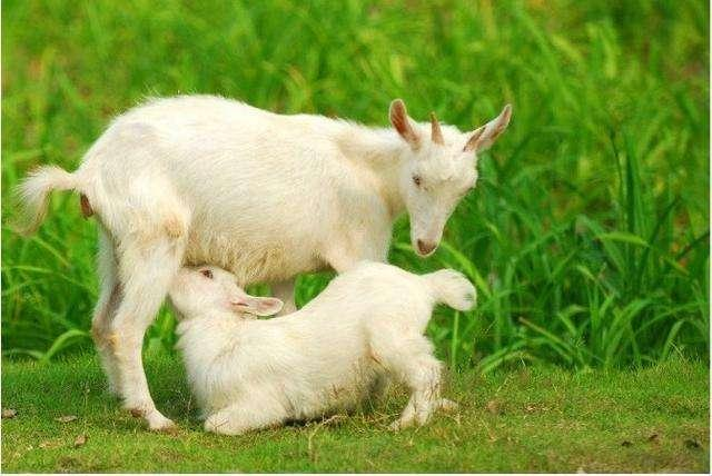 羊有跪乳之恩。鴉有反哺之義。人呢? - 每日頭條