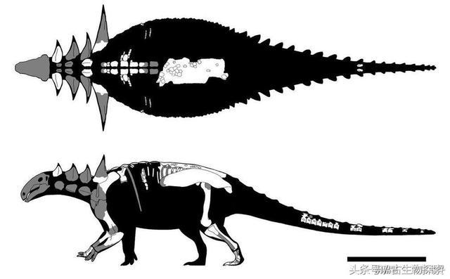 發現於加拿大的甲龍化石揭開恐龍隱身的秘密 - 每日頭條
