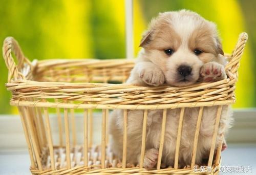 狗狗吐黃黃的粘稠物。還拉稀。不吃不喝怎麼辦 - 每日頭條