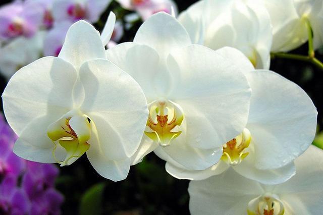 這些是你從沒見過的蘭花!大自然太神奇了! - 每日頭條