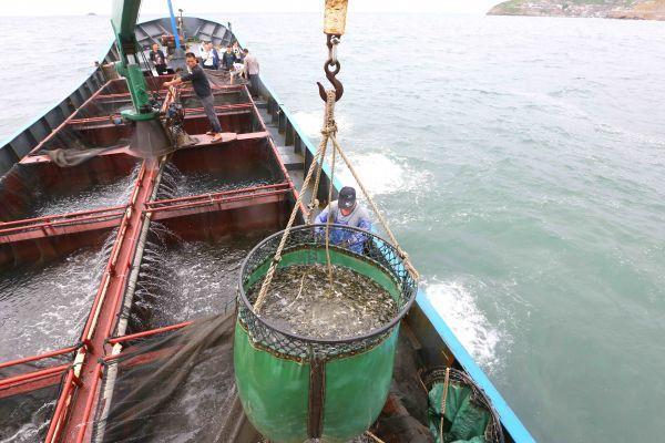 英媒:中國近海漁業資源匱乏 漁民赴遠洋捕魚引糾紛 - 每日頭條