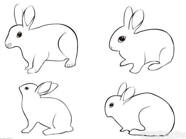 簡單輕鬆畫小動物。不會畫畫的可以跟我一起來 - 每日頭條