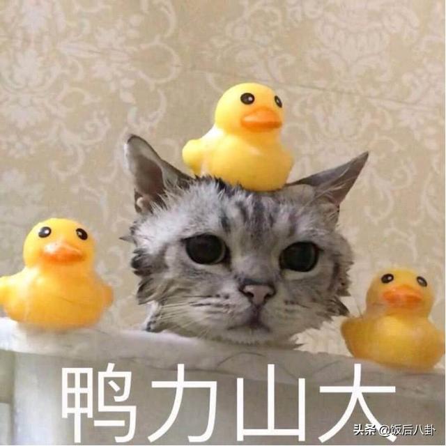 復仇者聯盟4 小鴨