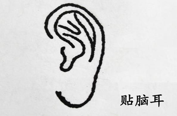 有這4種耳朵其中之一的人,天生註定就是副將,一輩子事業有成! - 每日頭條