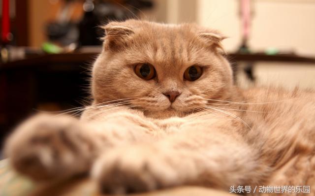為什麼說貓有9條命?九命貓妖是真的存在嗎 - 每日頭條