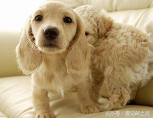 狗狗嘔吐的常見原因,鏟屎官們知道幾個 - 每日頭條