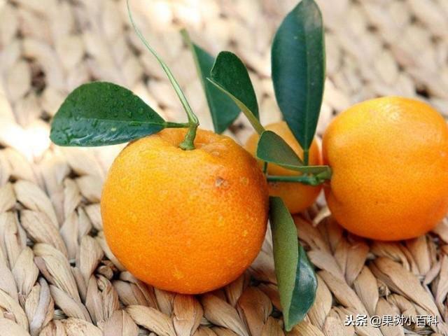 柑橘是「黃金果」,但也有8個禁忌,不妨了解下 - 每日頭條