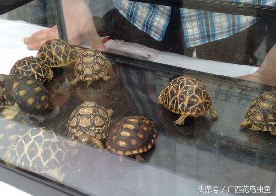 300歲的烏龜,和金剛一樣的龐然大物 - 每日頭條