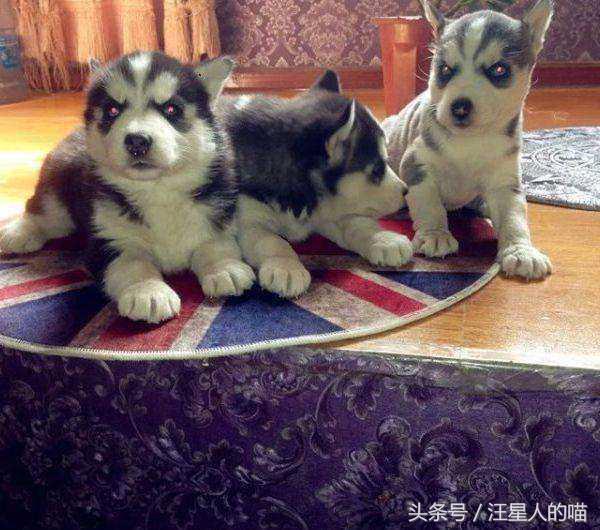 養狗老手教你:如何從一群狗中。挑選出最好的那隻狗! - 每日頭條