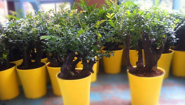 中秋臨近,這種水果最應節,吃完把籽種下來,一個月後香氣四溢 - 每日頭條