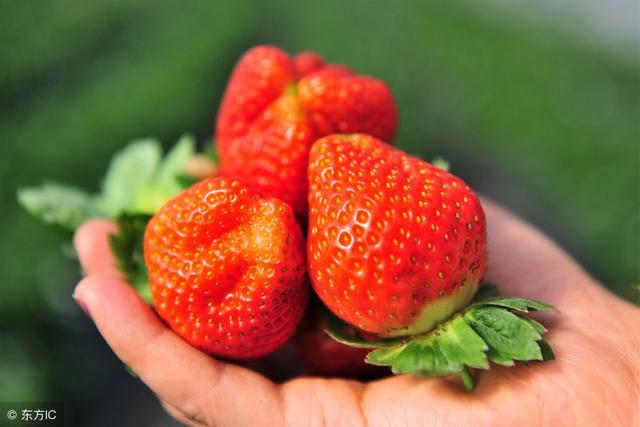 草莓怎麼洗乾淨。經常吃有什麼好處 - 每日頭條
