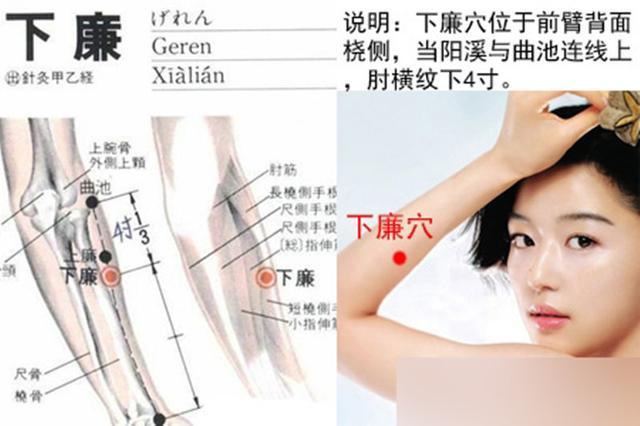下廉穴,治療肘臂痛的要穴,對腸胃病有特效 - 每日頭條
