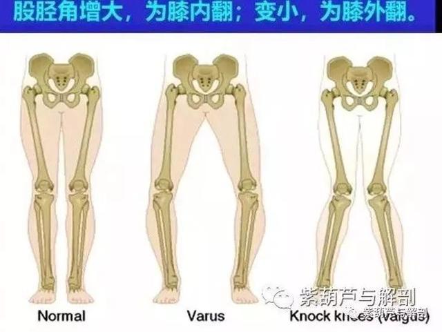 膝關節詳細解剖 - 每日頭條