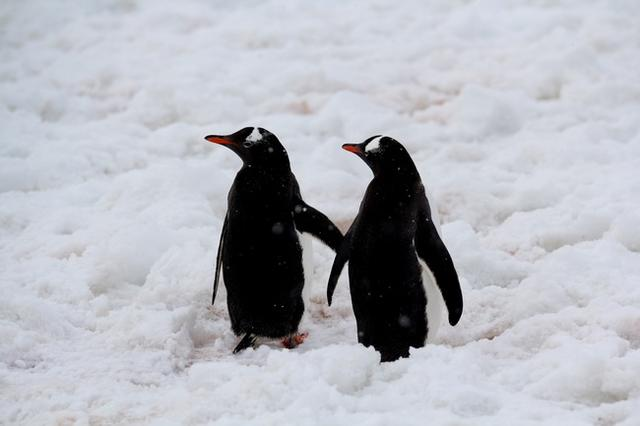 實景探訪南極企鵝之家(多圖) - 每日頭條