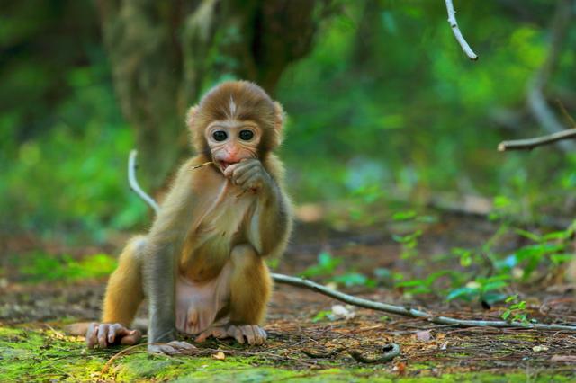 幾幾年出生的屬猴人:不同的一生,有揚揚得意的前程,1968,92年的!你家有嗎 - 每日頭條