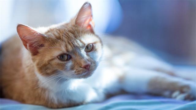 防止貓夜叫的4個絕招!最後一個下不了手 - 每日頭條