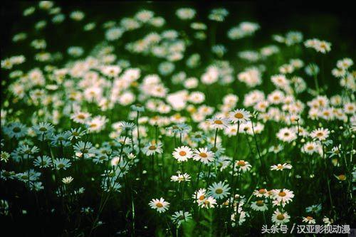 攝影技巧:花卉攝影,近距離感受花朵之韻 - 每日頭條