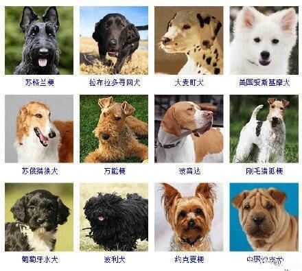 狗狗的品種有這麼多,都能說出來嘛 - 每日頭條