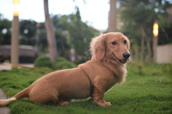 了解狗狗品種特質。再也不用擔心買不到適合的狗狗了 - 每日頭條