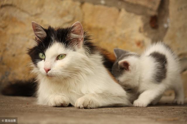 闢謠:新生小貓咪不能摸不能看。沾上陌生氣味就會被貓媽媽吃掉? - 每日頭條