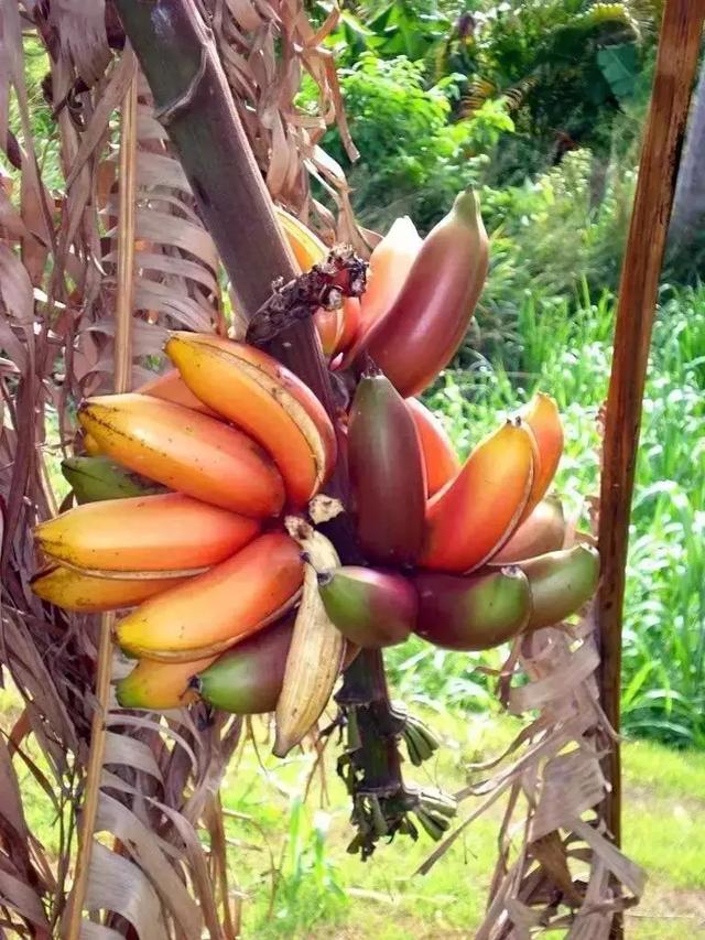 生活在農村都沒見過這些蔬果。太美太驚奇了! - 每日頭條