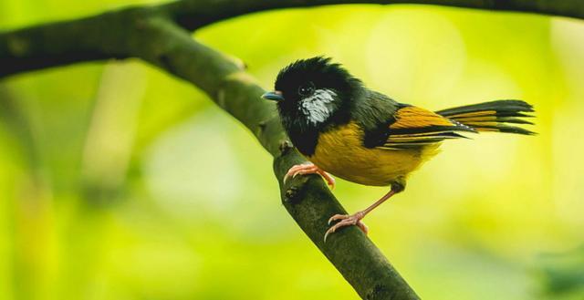 野鳥圖集:鳥類大全圖片 - 每日頭條