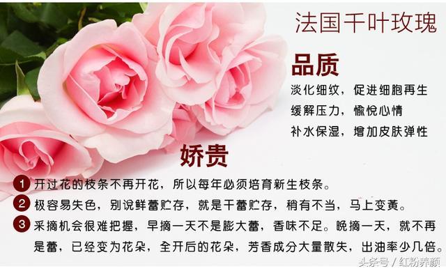 五種玫瑰花,你喝對了嗎? - 每日頭條