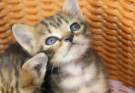 為什麼剛出生的小貓眼睛都是藍色的? - 每日頭條
