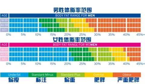 ファッショントレンド: エレガント體 脂肪 標準 女性