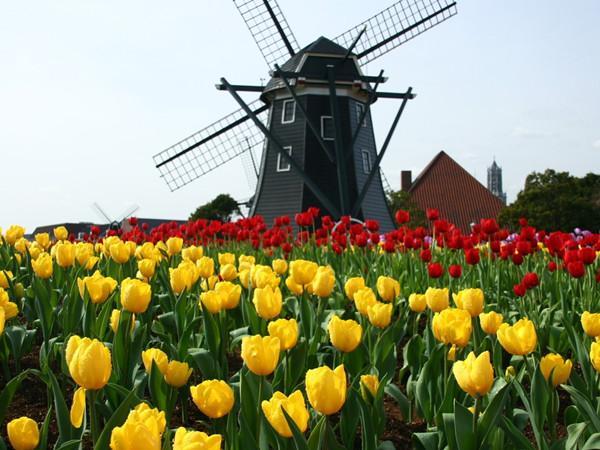 荷蘭允許雙重國籍到底是不是夢?今天我們終於等到了答案! - 每日頭條
