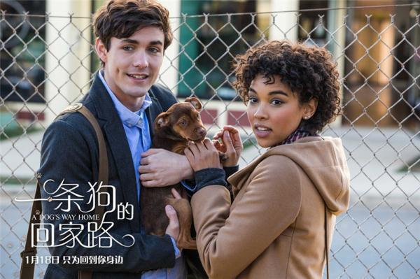 電影《一條狗的回家路》發布「尋狗啟事」預告 - 每日頭條