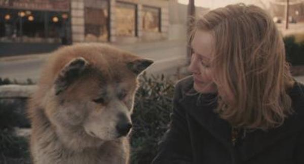 《一條狗的使命》:讓我們為一條狗再哭一次 - 每日頭條