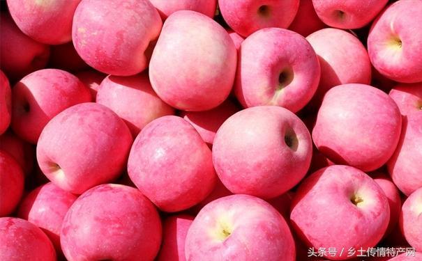 甘肅秦安的蘋果。有什麼不一樣。不也是蘋果嗎 - 每日頭條