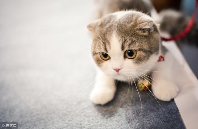 貓咪掉毛是什麼原因?貓咪舔的毛髮都去哪了? - 每日頭條