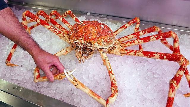 4米長的螃蟹能吃人?揭秘殺人蟹背後不為人知的事兒 - 每日頭條