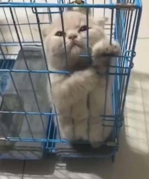 小奶貓不想住籠子中,一直站著表示抗議,幾分鐘後,主人:哈哈! - 每日頭條