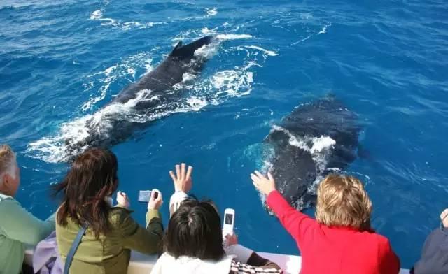 走!讓我們去看鯨魚 說說世界最佳賞鯨地 - 每日頭條
