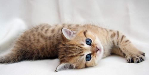 貓咪頻繁打噴嚏,是感冒還是貓鼻支?這3點快速教你區分 - 每日頭條