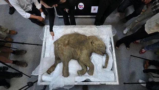 既能復活猛獁象,又能復活貓王,科學家們的起死回生術有多神奇? - 每日頭條