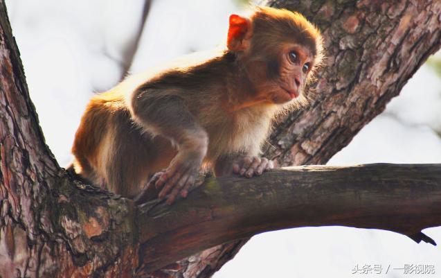 1992年生肖猴是什麼命 不信千萬別點 - 每日頭條