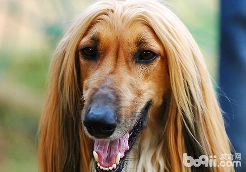 狗狗洗牙有什麼風險 - 每日頭條