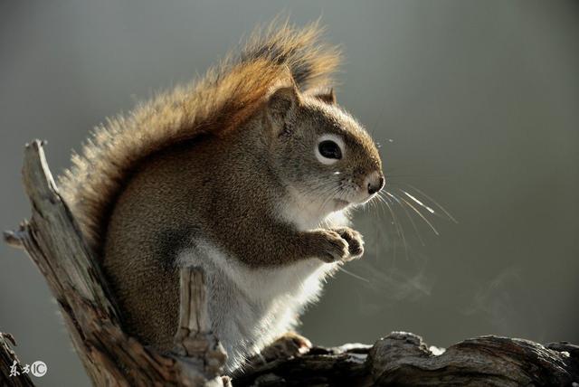 漂亮的毛絲鼠 - 每日頭條