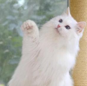 1、貓咪看主人洗澡。到底是什麼心理在作祟? - 每日頭條