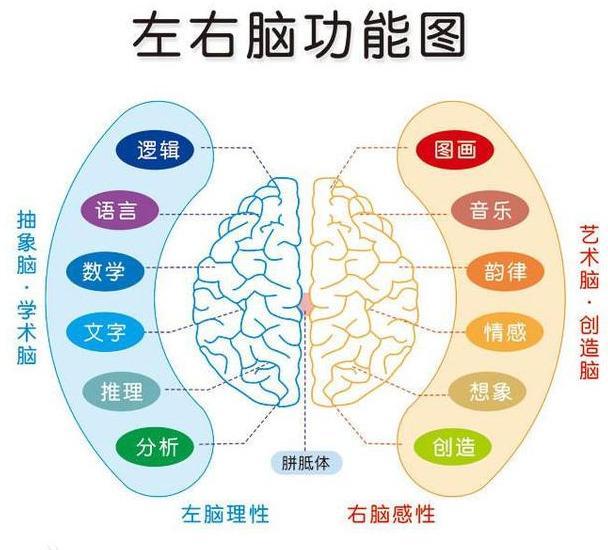 左右腦分工理論 - 每日頭條