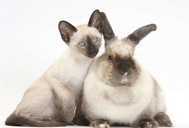 兔子的種類大全,你養過哪些? - 每日頭條